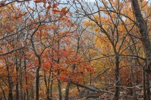 East Summit Trail, Roland, AR 72135, USA