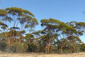 Eyre Highway, Fraser Range WA 6443, Australia