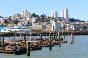 Photo taken at 39 Pier 39 Concourse, San Francisco, CA 94133, USA with Canon EOS 1100D