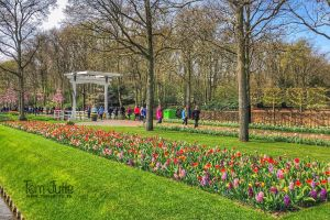 Keukenhof, Stationsweg, Meerzicht, Lisse, South Holland, Netherlands, 2161AN, Netherlands