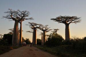 8, Madagascar