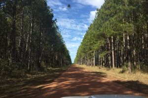 Maryborough Tuan Forest Rd, Tuan Forest QLD 4650, Australia