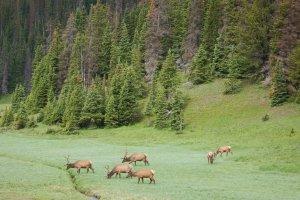 Rocky Mountain National Park, Poudre River Trail, Estes Park, CO 80517, USA