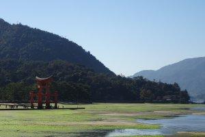 1128-2 Miyajimachō, Hatsukaichi-shi, Hiroshima-ken 739-0588, Japan