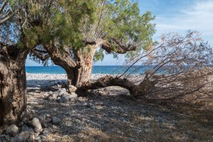 Unnamed Road, Ierapetra 720 59, Greece