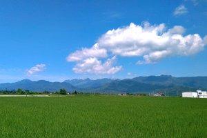 No. 125, Zhuofu Industry Rd, Yuli Township, Hualien County, Taiwan 981