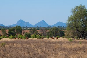 LOT 5 Gregory Highway, Hibernia QLD 4723, Australia