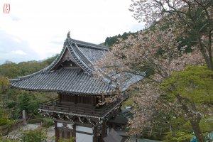 Japan, 〒610-1133 Kyōto-fu, Kyōto-shi, Nishikyō-ku, Ōharano Oshiochō, 1372 善峯寺