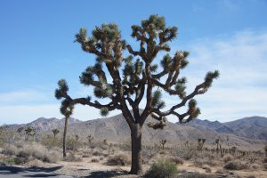 Joshua Tree National Park, 64330-64402 Park Boulevard, Joshua Tree, CA 92252, USA