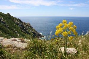 Galician Atlantic Islands Maritime-Terrestrial National Park, Illas Cíes, Barrio Illas Cies, 3, Vigo, Pontevedra, Spain