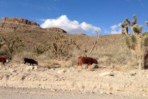 Grand Canyon Ranch Dr, Meadview, AZ 86444, USA