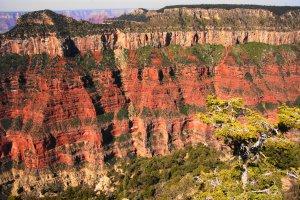 Grand Canyon National Park, Bright Angel Point Trail, North Rim, AZ 86052, USA