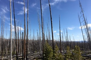 E Entrance Rd, Yellowstone National Park, WY 82190, USA