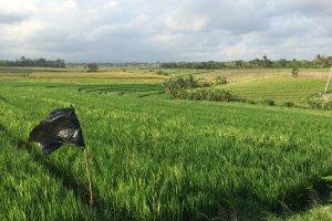 Selemadeg Timur, Kabupaten Tabanan, Bali 82162, Indonesia