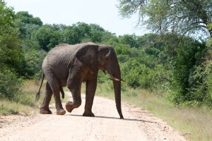 Sabie River Road, Kruger Park, South Africa