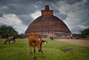 Watawandana Road, Anuradhapura, Sri Lanka