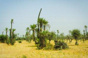 Route des Jardins de la Palmeraie, Marrakech, Morocco