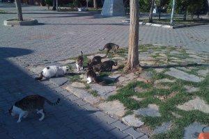 Mithatpaşa Mahallesi, Mevlana Caddesi, 10405 Ayvalık/Balıkesir, Turkey