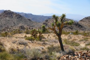 Joshua Tree National Park, 64191 Park Boulevard, Joshua Tree, CA 92252, USA