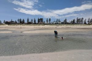Grange Beach, Esplanade, Henley Beach, City of Charles Sturt, South Australia, 5022, Australia