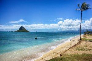 49-479 Kamehameha Hwy, Kaneohe, HI 96744, USA