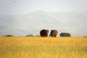 Queen Elizabeth National Park, Ntungamo - Katunguru Road, Uganda