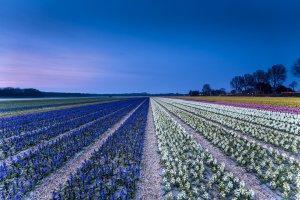 Zilkerduinweg 375-377, 2114 AM Vogelenzang, Netherlands