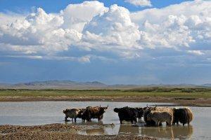 Khogno Tarna, Unnamed Road, Mongolia