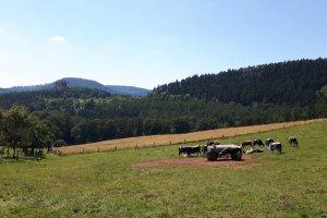 Gimbelhof, 67510 Lembach, France
