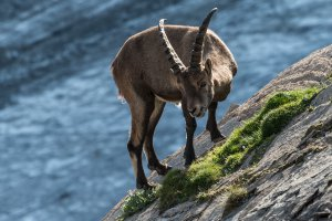 Hohe Tauern National Park, Winkl 38, 9844 Winkl, Austria
