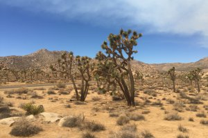 Joshua Tree National Park, 64528-64566 Park Boulevard, Twentynine Palms, CA 92277, USA