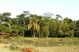 Nalchhiti 8420, Bangladesh