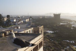 Photo taken at Rue Skala, Essaouira, Morocco with Canon EOS 1100D