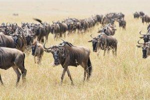 Mara Triangle - Maasai Mara National Reserve, Maasai Mara National Reserve, E176, Kenya