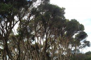 2745 South Gippsland Highway, Tooradin VIC 3980, Australia