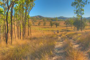 Photo taken at 593-696 Grieves Road, Colinton QLD 4306, Australia with NIKON D300