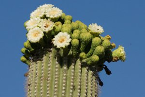 Organ Pipe Cactus National Monument, Unnamed Road, Ajo, AZ 85321, USA